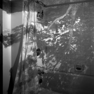 Camera Obscura Image of a Tree in Bathroom, 1999